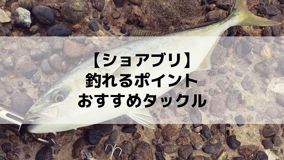 【北海道】ショアブリが釣れる実績ポイント5選!タックル、ルアーも紹介